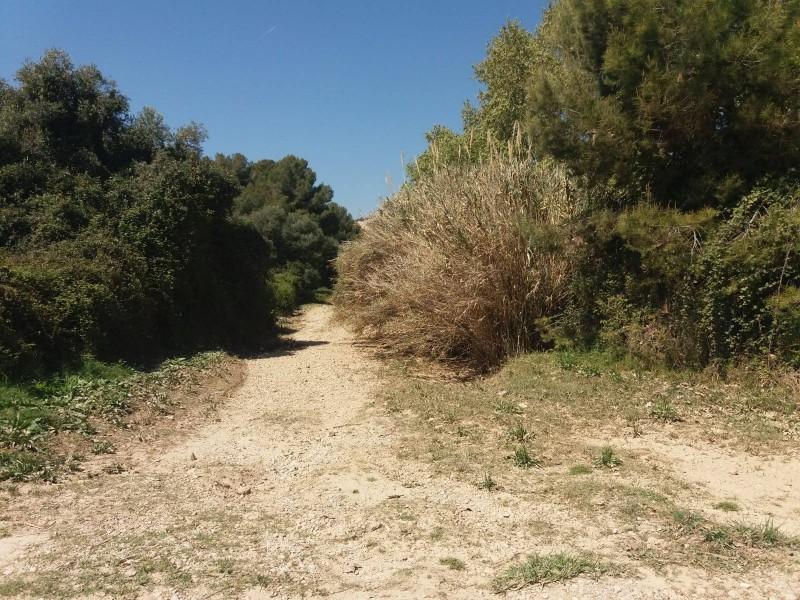 En què consisteix el pla de restauració de la Riera de Ribes? Cinc mesures concretes 4